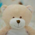 Teddy by Haz Preena