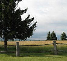 Tranquil Field by Liesl Gaesser