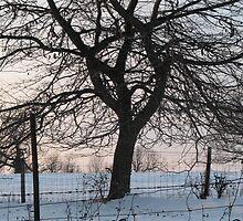 Winter Oak Silhouette at Sunset  by Liesl Gaesser
