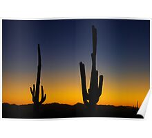 Saguaro sunset near Tucson, Arizona Poster