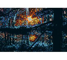 Twilight in a Dark Forest Photographic Print