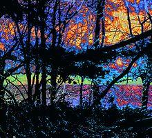 "Black Jungle and an RGB by David ""Oz""  Osterczy"