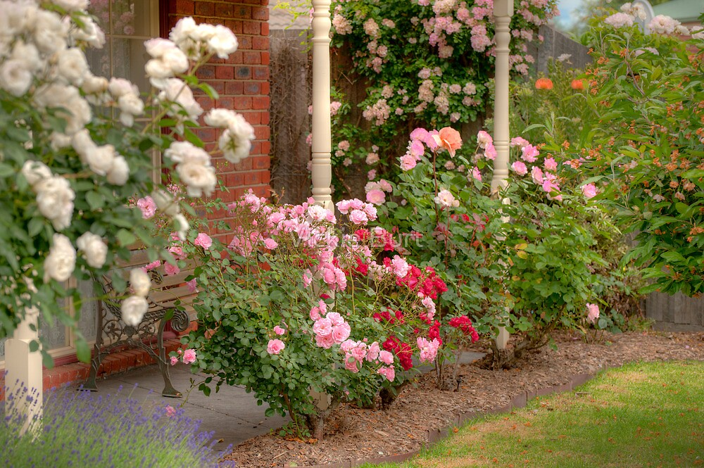 Roses Galore by Vickie Burt