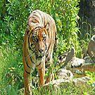 Tiger i-Pad Case by ipadjohn