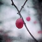 Lonely Winterberry by Sybille Sterk