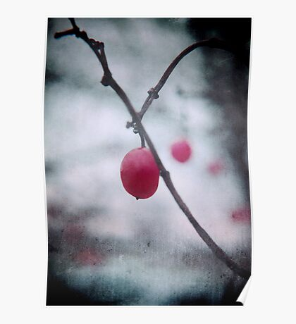 Lonely Winterberry Poster