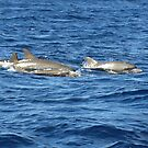 Family of dolphins swimming by JenniferLouise