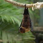 Fruitbat hanging by JenniferLouise