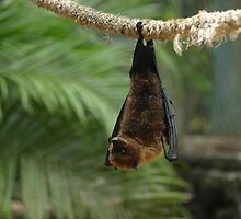 Fruitbat hanging by JenniferLouise