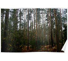 Sandringham Woods Poster
