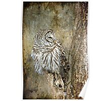 Textured Owl Poster