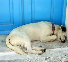 Dog Sleeping in Santorini by Kawka