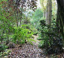 A woodland walk by nag71