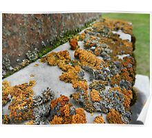 lichens on graves 1 Poster