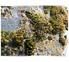 lichens on graves 2 Poster
