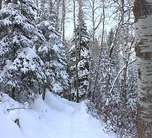 Snowy Hiking trail by Jim Sauchyn