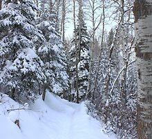 Snowy Hiking trail by Jim Sauchyn