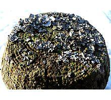 Lichen Fencepost Photographic Print