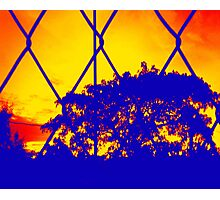 Wire Tree Afternoon Photographic Print