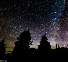 Starry Evergreens by Krishan Bansal