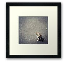 Cute little cat Framed Print