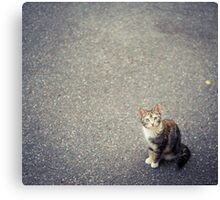 Cute little cat Canvas Print