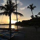 Palm Sunset by John Dalkin