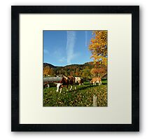 October Cows Framed Print