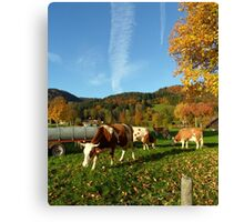 October Cows Canvas Print