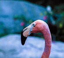 Pink flamingo by gatonegro