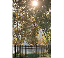 Sycamore Sunrise Photographic Print