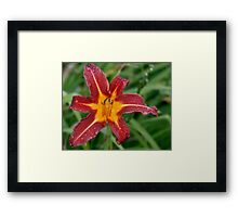If I Could Only Find One Perfect Lily Before I D... Framed Print
