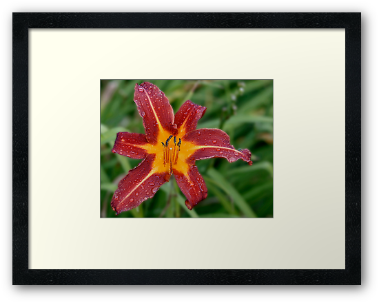 If I Could Only Find One Perfect Lily Before I D... by Gene Walls