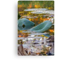 dried waterlily and reflection on lake in autumn Canvas Print