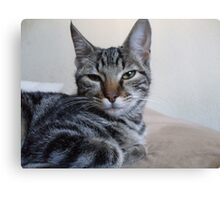 Gray Tabby Kitten Canvas Print