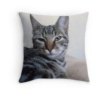 Gray Tabby Kitten Throw Pillow