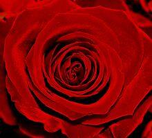 Red velvet  by Penni