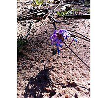 Bush Flower Photographic Print