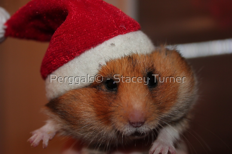Merry Christmas by Perggals© - Stacey Turner