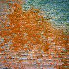 Lichen # 41 by Frederick James Norman