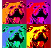 Pit Bull Pop Art Photographic Print