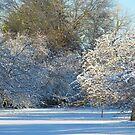 Wonderful Winter by Linda Miller Gesualdo