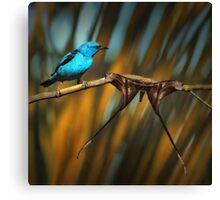 Bird and Emperor moth Canvas Print