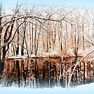 Winter Pond by ©The Creative  Minds