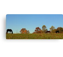 Back Forty Canvas Print