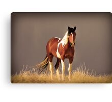 Paint Filly, Sepia Canvas Print