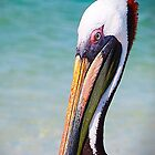 Pelican by thynquer