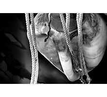 Bumper and Ropes Photographic Print