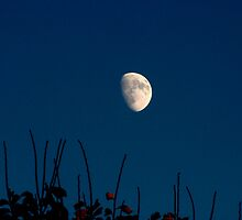 Autumn Moon by Gene Walls