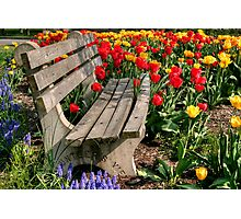 Abducted Park Bench Photographic Print